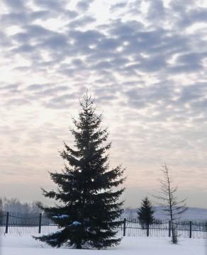 Зимний сон.
