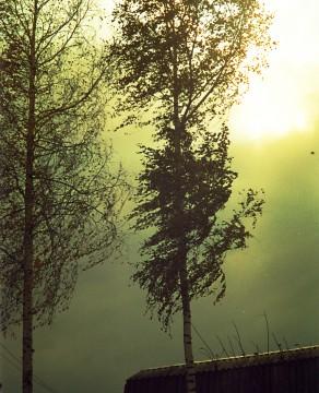 И ветер сдувает последние листья…