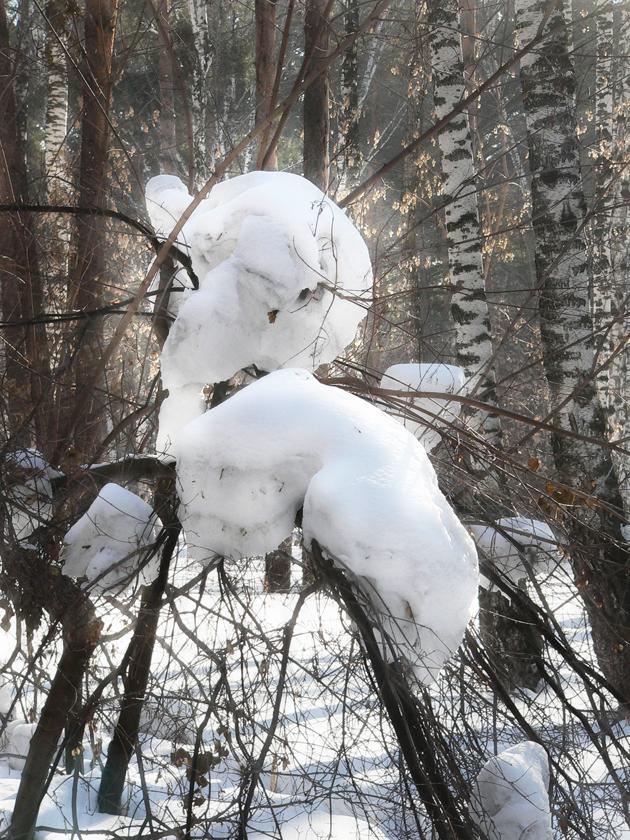 Фотография-зимы-Чудо-лесное.