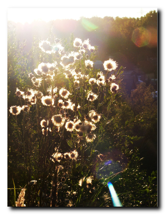 Вариообъектив-блики-на-линзах