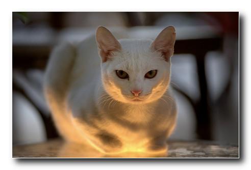 Освещение-в-фотографии-свет-резко-снизу