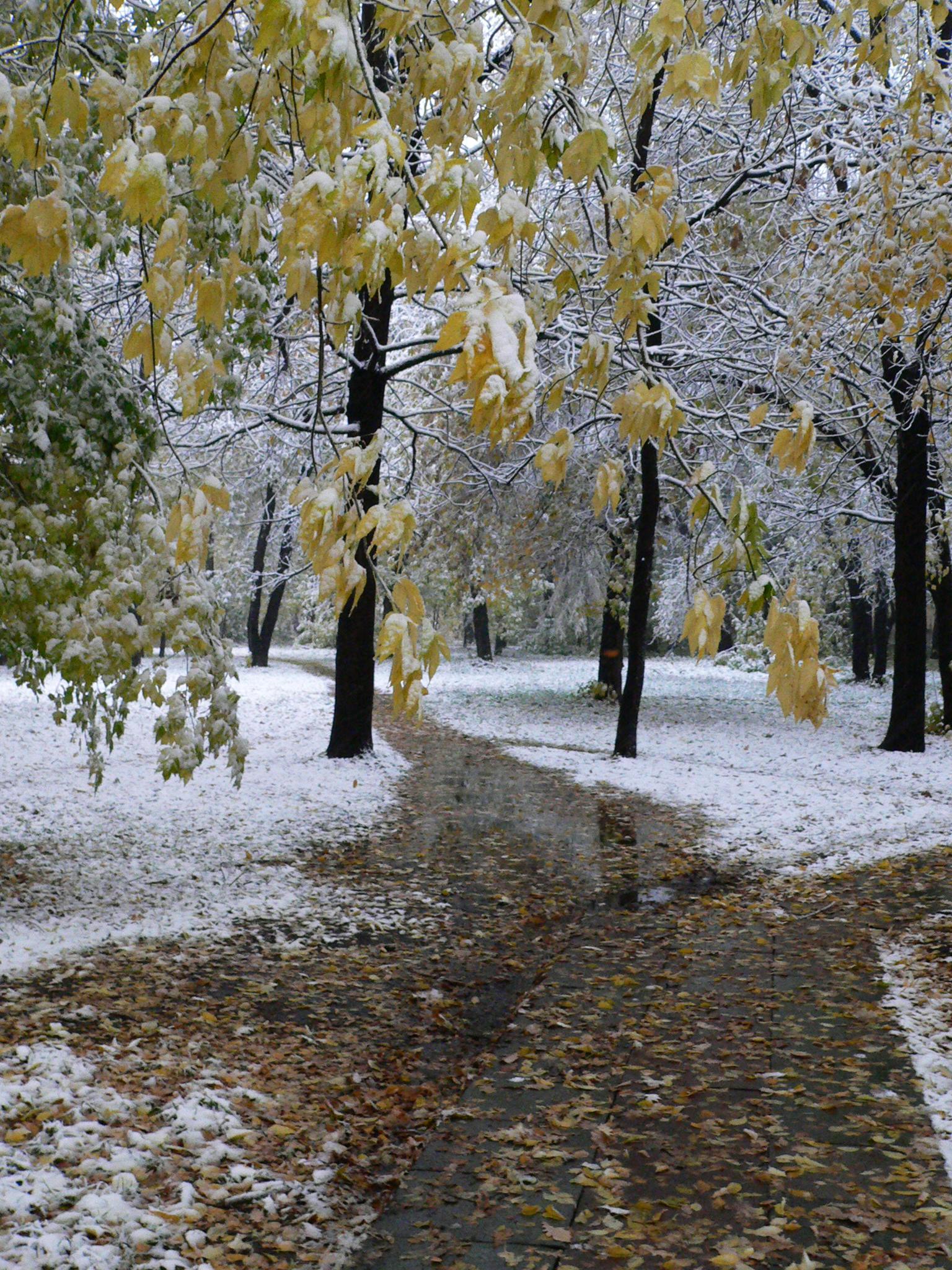 Съемка-снегопада-осенью