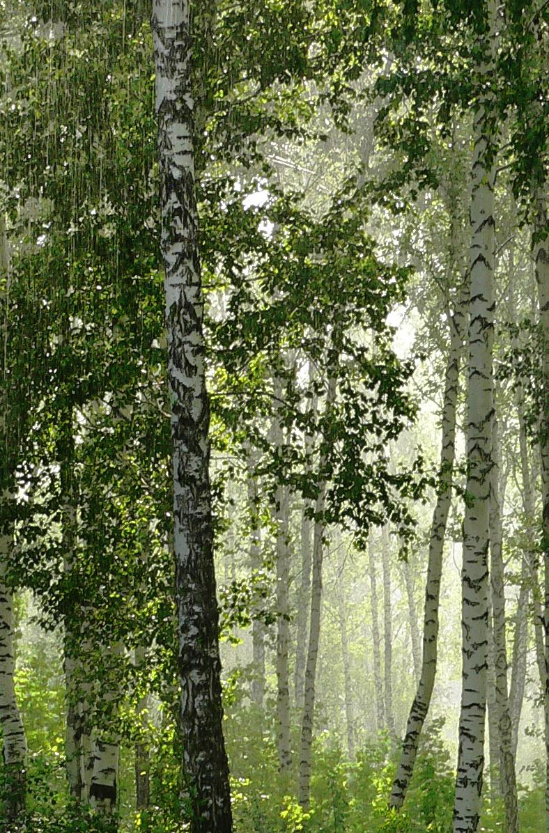 Фотосъемка-дождя-летний-дождь-в-лесу