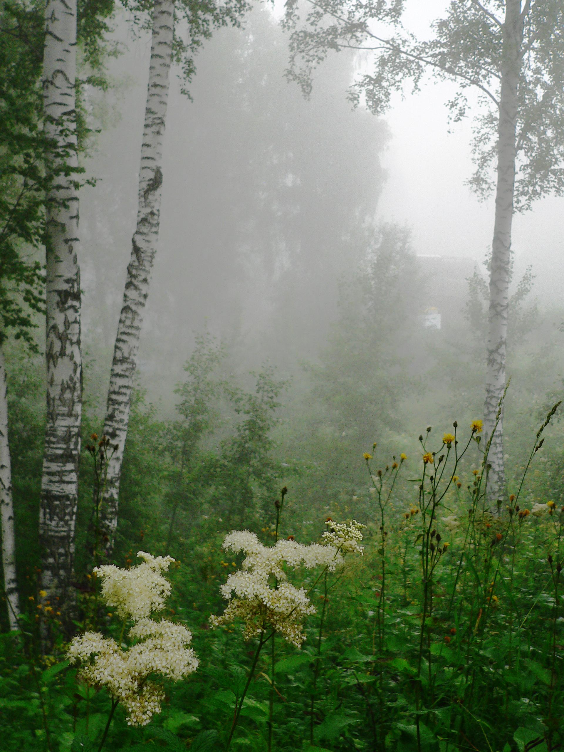 Съемка-тумана-в-лесу