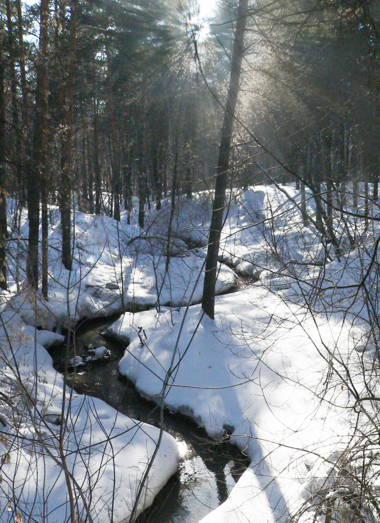 Март в лесу.
