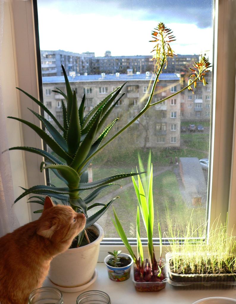 И даже кактус расцвел на окне.